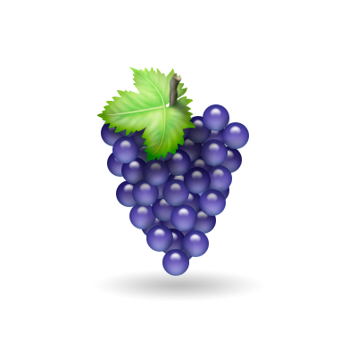 Illustrations: Grapes